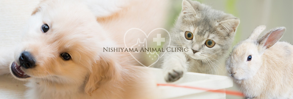 千葉県流山市の動物病院