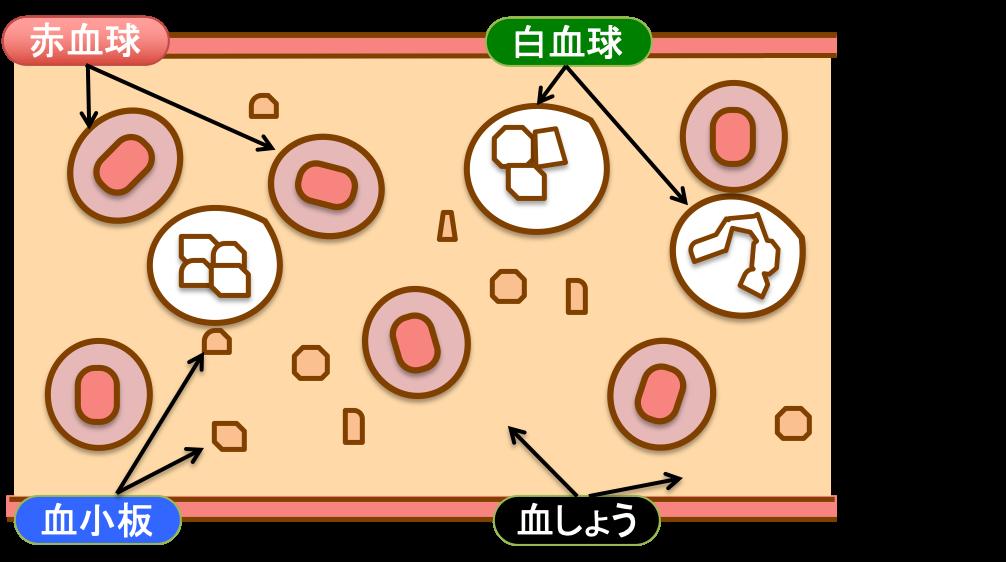 血球成分のイラスト|西山動物病院|流山市・松戸市